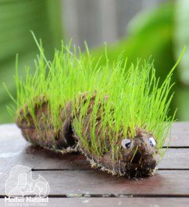 Caterpillar-Grass-Head