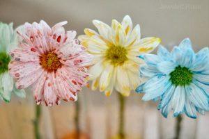 Flower experiment 002