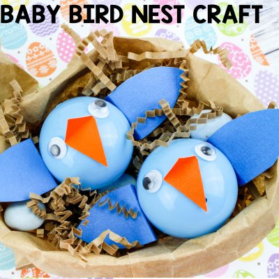 Baby Bird Nest Craft